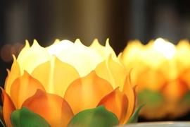 Fotobehang - Wellness - Lotus Bloem 1 - Lotus Flower 1