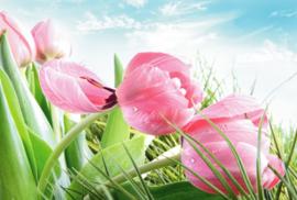 Fotobehang - Tulpen ( roze tulpen )