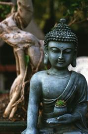 Fotobehang - Buddha 14