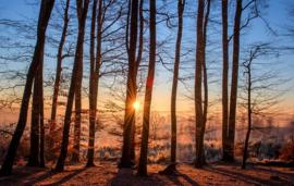 Fotobehang - Bomen & Bos - Forest in winter