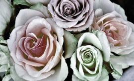 Fotobehang - Woonkamer - Vintage rozen
