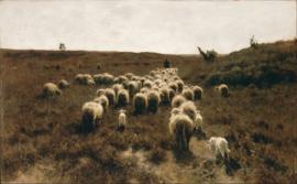 Schilderijbehang - Anton Mauve - De Terugkeer van de Kudde, Laren