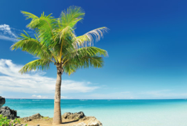 Fotobehang - Strand met Palmboom
