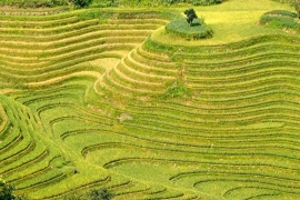 Fotobehang - Natuur - Rijstvelden - Ricefields