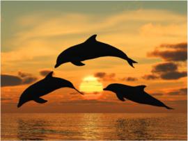 Fotobehang - Dolfijnen bij zonsondergang - Fotobehang Dolfijnen