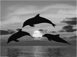 Fotobehang - Zwart wit - Dolfijnen bij zonsondergang