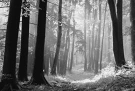 Fotobehang - Zwart wit - Bomen & Bos - Fotobehang in zwart wit