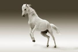 Fotobehang - Dieren - Paarden 6 - Horses 6