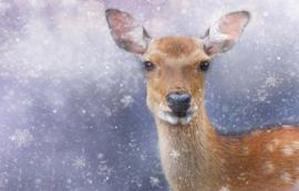 Fotobehang - Dieren - Ree / Deer