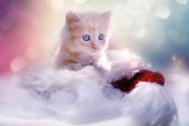 Fotobehang - Kat II - Cute cat
