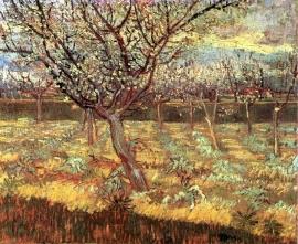 Schilderijbehang - Van Gogh - Apricot Trees