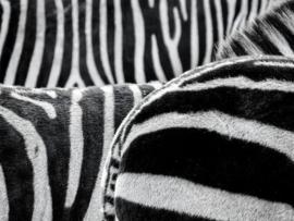 Fotobehang - Zwart wit - Zebra strepen