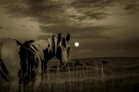Fotobehang - Dieren - Paard 2 - Horse 2