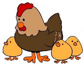 Fotobehang - Kinderkamer - Hen met kuikens - Chicken with hatchlings
