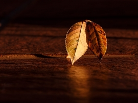 Fotobehang - Bomen & Bos - Gouden Herfstblad- Golden Autumn Leaves