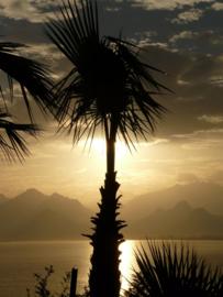 Fotobehang - Palm ( idyllisch )