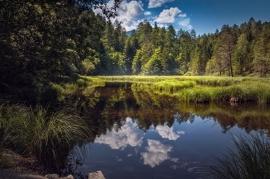 Fotobehang - Natuur - Bosmeer - Woodlake