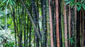Fotobehang - Bamboe II