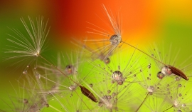 Fotobehang - Macrofotografie - Waterdruppels 2 - Drops of Water 2