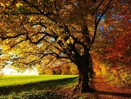 Fotobehang - Bomen & Bos - Herfstboom - Autumn Tree