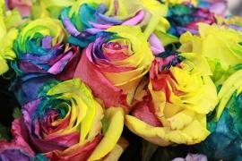 Fotobehang - Bloemen - Multicolor Roos