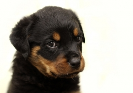 Fotobehang - Kinderkamer - Puppy 2