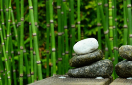 Fotobehang - Bamboe