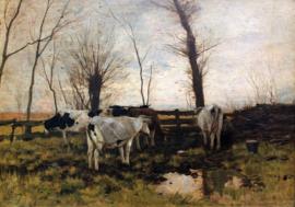 Schilderijbehang - Anton Mauve - Koeien in de weide