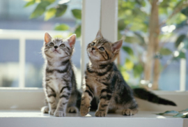 Fotobehang - Kittens - Cats looking up