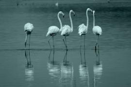 Fotobehang - Flamingo