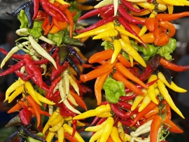 Fotobehang - Food - Vrolijke pepers - Bright peppers
