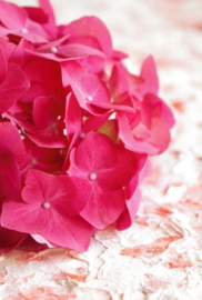 Fotobehang - Bloemen - Hortensia pink