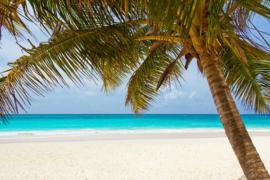 Fotobehang - Woonkamer - Tropisch strand II