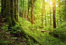 Fotobehang - Woonkamer - Forest