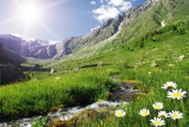 Fotobehang Bergen - Fotobehang Bergen - Zwitserse Alpen