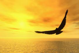 Fotobehang Adelaar - Fotobehang Adelaar / Eagle