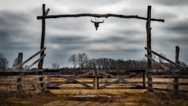 Fotobehang - Texas landschap