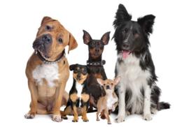 Fotobehang - Blije honden - Happy dogs