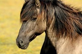 Fotobehang - Paard 1 - Horse 1