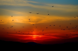 Fotobehang - Zonsondergang 3 - Sunset 3