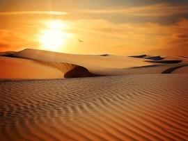 Fotobehang - Natuur - Woestijn - Dessert