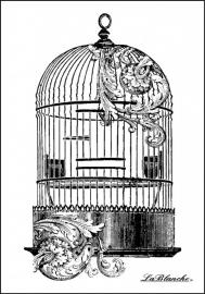 La blanche 1310 Wonder mooie vogelkooi voorraad 2