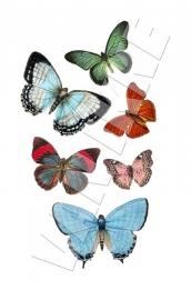 Diverse Vlinders