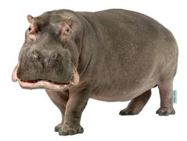 Muursticker Nijlpaard