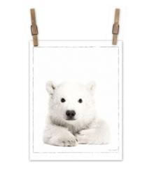 Ijsbeer op canvas XL