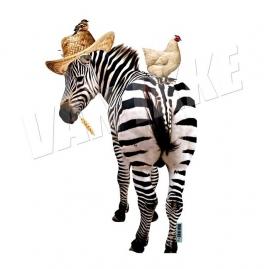 Zebra met kip
