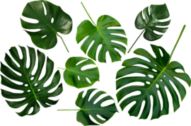 Muursticker Monstera blad