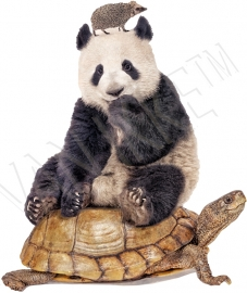 Panda on turtle with hedgehog