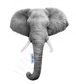 Elefant XS