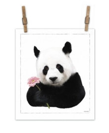 Panda op canvas XL